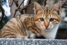 cat       じ〜〜っ  Posted by mai-u  on 2015-01-19 14:02:07      Tagged:  , ねこ , 猫 , Cat  - http://newsyork.gq/cat-157/