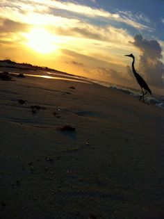Love to Live in Pensacola, Florida~: Summer Solstice & 1st Day of Summer 2012~