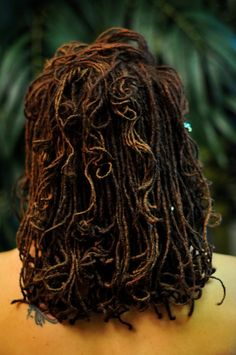 Isis locks. Her hair is beautifully maintained, great size and colour.  DOPE!