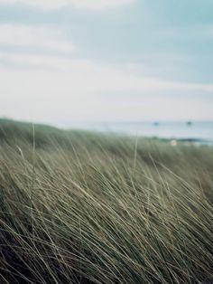 De Peppels Photo Blog | duinen | dunes