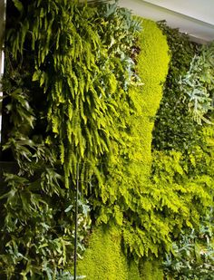Innovators in building vertical gardens Mr. Green had several successful projects that enjoy people from Sofia. One of the most famous vertical garden Landscape Architecture, Landscape Design, Vertical Vegetable Gardens, Green Wall Art, Green Walls, Green Facade, Vertical Garden Design, Arte Floral, Plant Wall