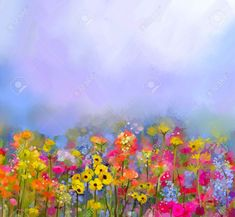 Picture of Abstract art oil painting of summer-spring flowers. Cornflower, daisy flower in fields. Meadow landscape with wildflower, Yellow-red Sky color background. Hand Paint floral Impressionist style stock photo, images and stock photography. Seascape Paintings, Oil Painting Abstract, Painting Frames, Painting Prints, Gouache, Champs, Yellow Wildflowers, Flower Landscape, Spring Painting