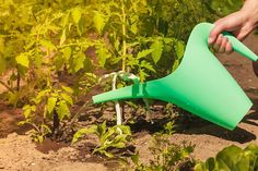 Garden Trowel, Garden Tools, Watering Can, Home And Garden, Canning, Gardening, Rose Trees, Lawn And Garden, Plant