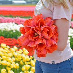 Order them now for a spring garden full of tulip flowers. Bulb Flowers, Tulips Flowers, Tulip Bulbs, Parrot Tulips, Tulip Fields, Spring Has Sprung, Flower Farm, Spring Garden, Gardening