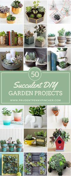 50 Succulent DIY Garden Projects