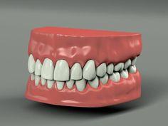 Teeth Model in Anatomy 3d Anatomy, Teeth, Model, Scale Model, Tooth, Models, Template, Pattern