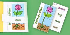 Parts of a Plant Foldable Interactive Visual Aid Template - plant - twinkl Parts Of A Flower, Parts Of A Plant, Plant Science, Flower Backgrounds, Flower Crafts, Planting Flowers, Plant Leaves, Templates, Activities