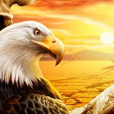 Eagle #iPad  #Wallpaper| http://www.ilikewallpaper.net/ipad-wallpaper/, welcome to visit my website to enjoy more beautiful wallpapers.