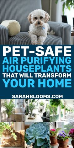 Purify your home's air naturally with these Top 20 Air Purifying Houseplants that are super low-maintenance and safe for pets and kids! #petsafehouseplants #kidsafehouseplants #airpurifyinghouseplants #naturalliving #naturalcleaning #naturalhome 20 Air Purifying Houseplants Safe for Dogs   Cats - Sarah Blooms