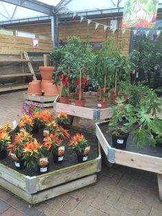 Dobbies - Chesterfield - Garden Centre - Garden Retail - Lifestyle - Layout - Landscape - Visual Merchandising - www.clearretailgroup.eu