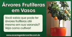 140806-arvores-frutiferas-em-vasos-cultivar-como-cuidar-curiosidades-plantas-jardinagem-paisagismo-acacia-garden-center