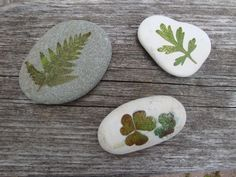 hammered leaves on stone http://resurrectionfern.typepad.com/resurrection_fern/2009/06/the-stone-diaries-part-x-and-a-very-easy-stone-craft.html