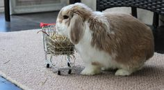 just a bunny doing her grocery shopping