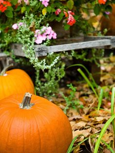 Start planning fall gardening projects with this handy to-do list--> http://www.hgtv.com/gardening/autumn-gardening-planner/index.html?soc=pinterest