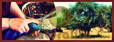 Argan (Argania spinosa), anavatanı Fas'ın güneybatısında bulunan kireçli topraklara sahip, yarı çöl olan Sous vadisi ve meyvelerinin çekirdeklerinden elde edilen kozmetik ve mutfakta kullanılan oldukça değerli yağı için yetiştirilen fundagillerden bir ağaçtır