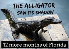 Fl Weather, Florida Weather, Florida Funny, Florida Girl, Florida Humor, Orlando Strong, Florida Images, Happy Groundhog Day, Gulf Of Mexico