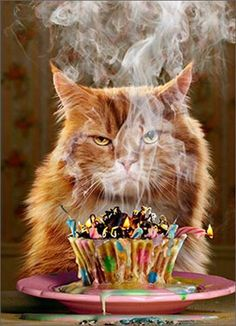 Happy Birthday Friend, Birthday Wishes Funny, Happy Birthday Images, Cat Birthday, Happy Birthday Greetings, Birthday Cupcakes, Birthday Greeting Cards, Birthday Quotes, Happy Birthday Funny Humorous