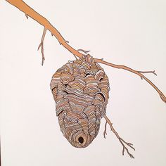 Nests Wasp 10 Ideas Wasp Hornets Nest Wasp Nest