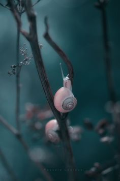 into the blue by Pascale #Snails