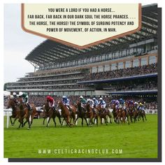 Celtic Racing Club: The Thrill of Horse Racing & Racehorse Ownership Racehorse, Dark Souls, Horse Racing, Celtic, Action, Horses, Club, Group Action, Horse