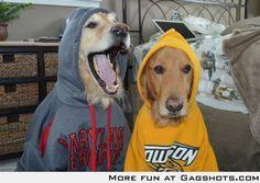Gangsta dogs