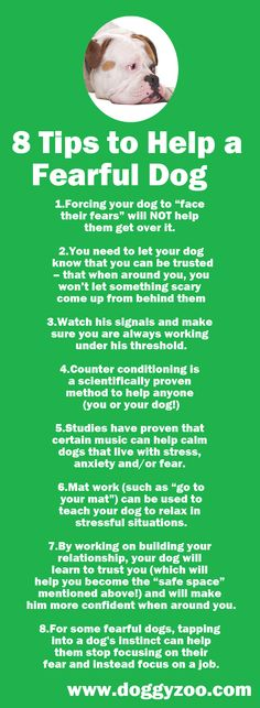 8 Tips to Help a Fearful Dog