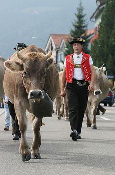 Désalpe, Switzerland,  - Alpabzug by steffi's, via Flickr