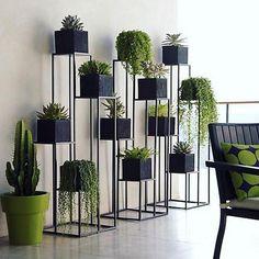 📷 : @reddicksrelocationrealty #succulents #succulent #succulove #suculentas #🌵 #cactus #cacti #kaktus #多肉植物 #多肉 #다육식물 #サボテン #선인장 #суккуленты #nature #plants #plant #گیاه #گل #ساکولنت #کاکتوس #succulentgarden #succulentaddict #succulentlover #succulentsofinstagram #succulenthoarder #suculenta #succulents_only #succulentjunkie #succulentplant . 💚🌵💚 💚🌵💚 💚🌵💚 please see my other pages: . 🌄@amin_hajimohamadi_ 🌳@amin__hajimohamadi