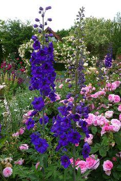 Bodendecker Pflanzen Und Pflegen Gardening And Landscaping