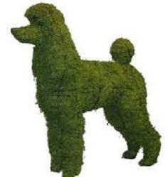 Wow, a poodle bush !! A a great idea.