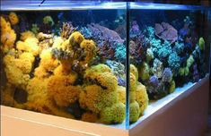 Best tanks from around the world. - Page 14 - Reef Central Online Community