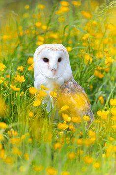 Beautiful owl...