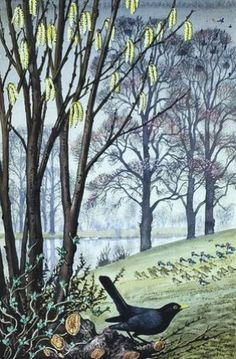 C Tunicliffe. Catkins and blackbird.