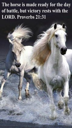The Best Horse Themed Backgrounds – Phone Wallpapers Beautiful Arabian Horses, Most Beautiful Horses, Majestic Horse, Animals And Pets, Cute Animals, Wild Animals, Horse Wallpaper, Hd Wallpaper, White Horses