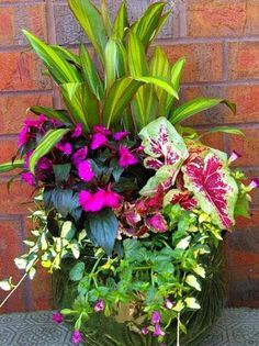 DIY Colorful Shade Container Garden.....1 – 1 gal. Cordyline 1 – 6 inch New Guinea Impatiens 1 – 6 inch Caladium 1 – 4 inch coleus 2 – 4 inch Variegated Vinca vine 2 – 4 inch Wishbone flower 1 – 32 inch wide container 1 – bag Pike Potting soil 2 cu.ft. 1 – bag E.B. Stone Sure Start Fertilizer