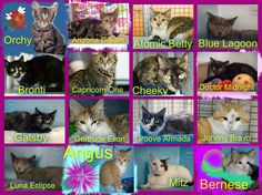 These cats/kittens desperately need a save by 3pm Fri 28/11/14. If you are a rescue or know a rescue that can help to contact Renbury Farm Animal Shelter, NSW
