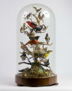 Taxidermy <3 on Pinterest | Taxidermy, Bell Jars and Glass Domes