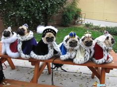 here are some adorable mug shots of adorable pugs. we accept photos of your pugs. pugs in costumes. pugs in cartoon. pugs in videos. pugs in love. mug pug. Amor Pug, Dog Pictures, Animal Pictures, Funny Pictures, Funniest Pictures, Funny Images, Baby Animals, Funny Animals, Cute Animals