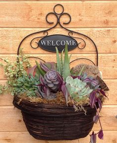 Nice succulent hanging basket by Chicweed Patio & Garden Succulents In Containers, Cacti And Succulents, Planting Succulents, Planting Flowers, Short Plants, Hanging Flower Baskets, Succulent Arrangements, Cactus Y Suculentas, Succulent Terrarium