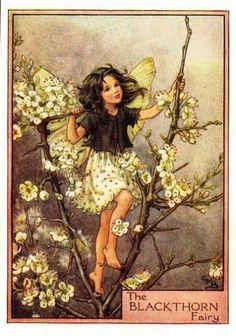 Blackthorn Fairy - Cicely Mary Barker.