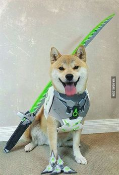 For all you doge and overwatch lovers