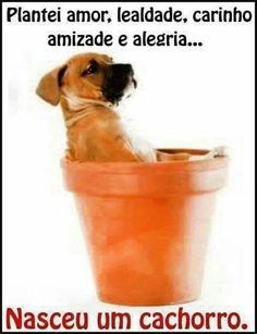 New dogs food funny humor Ideas Love Quotes Funny, Dog Quotes, Funny Dog Memes, Funny Dogs, Animals And Pets, Cute Animals, Dog Tumblr, Boy Dog, Dog Birthday