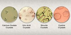 Urinary crystals (crystalluria) « Pet Food Nutrition