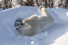 Maman ourse et son ourson, roulant dans la neige, au Canada