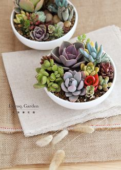 bowl of succulents, how lovely / #design #decor #gardening - Succulent Gardening