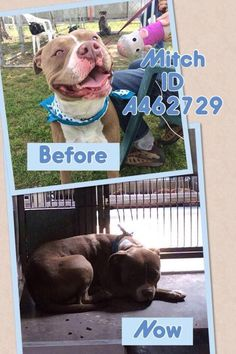URGENT bad shape kennel cough can be euthanized any time needs rescue grp 2 pull  San Bernardino, CA Animal Shelter pic.twitter.com/S3CsnmcKrG