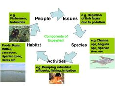Economic Restoration Begins with Ecosystem Restoration « JOURNAL OF HUMANITARIAN AFFAIRS