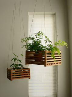 Hangplant
