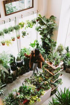 Plant shop seattle is a plant lovers dream - plant shop seattle – where to buy plants in seattle – plant shop inspo – plant inspiration – plant décor