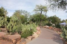 The Largest Botanical Cactus Garden In The Southwest Is Right Here In Nevada And It's Mesmerizing Cactus Types, Landscape Model, Adventure Activities, Ornamental Plants, Garden Features, Water Treatment, Holiday Lights, Cacti And Succulents, Botanical Gardens